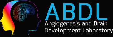 The Angiogenesis and Brain Development Laboratory Logo